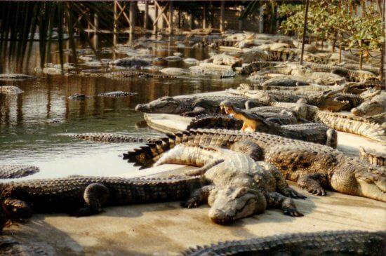 29-12BangkokCrocodileFarm