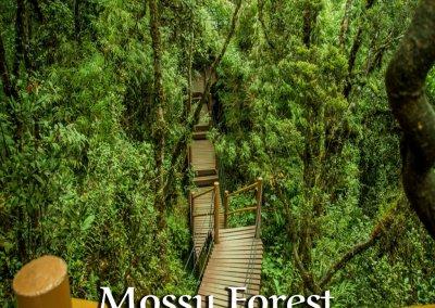 جميع الاماكن السياحية في مرتفعات كاميرون (1)