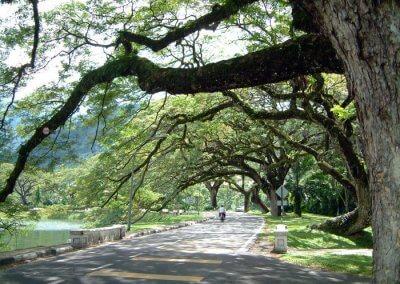 حدائق بحيرة تايبينغ Taiping lake Gardens (1)