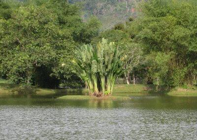 Palm Tree on Small Island