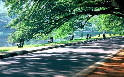 حدائق بحيرة تايبينغ