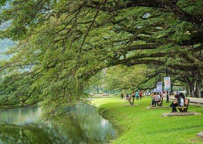 حدائق بحيرة تايبينغ Taiping lake Gardens (21)