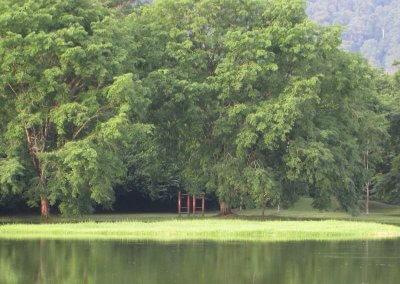 حدائق بحيرة تايبينغ Taiping lake Gardens (5)