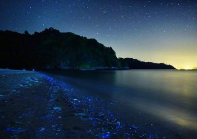 شاطئ الدموع الزرقاء في ميري سراواك (5)