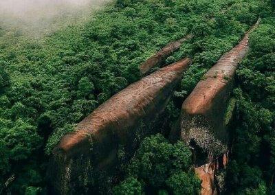 كما لو ان 3 حيتان يسبحون في وسط الغابة (5)