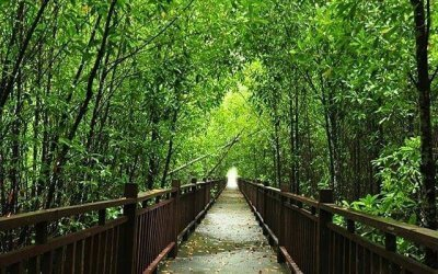لمحبي المشي بين الأشجار في الصباح