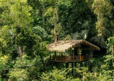 مكان جديد لمحبي التخييم في الغابات (1)