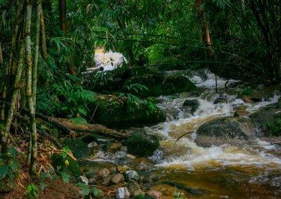 مكان جديد لمحبي التخييم في الغابات (10)