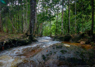 مكان جديد لمحبي التخييم في الغابات (11)