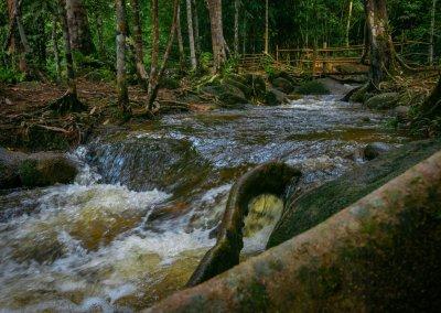 مكان جديد لمحبي التخييم في الغابات (12)