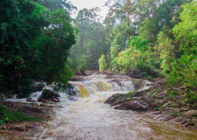 مكان جديد لمحبي التخييم في الغابات (16)