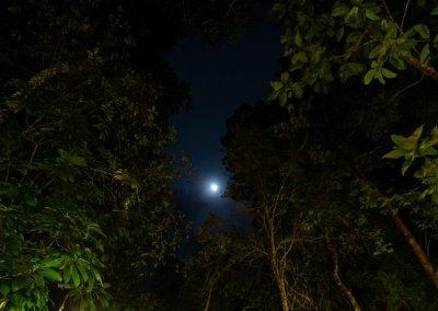 مكان جديد لمحبي التخييم في الغابات (20)