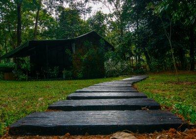 مكان جديد لمحبي التخييم في الغابات (47)