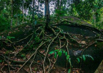 مكان جديد لمحبي التخييم في الغابات (49)