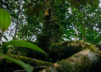مكان جديد لمحبي التخييم في الغابات (50)