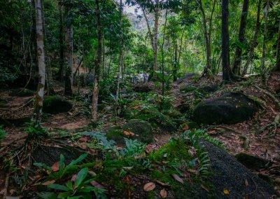 مكان جديد لمحبي التخييم في الغابات (51)