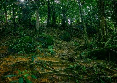 مكان جديد لمحبي التخييم في الغابات (52)