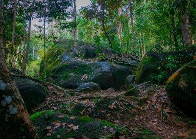 مكان جديد لمحبي التخييم في الغابات (53)