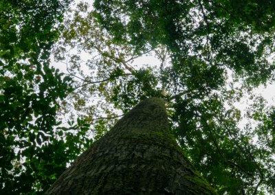 مكان جديد لمحبي التخييم في الغابات (55)