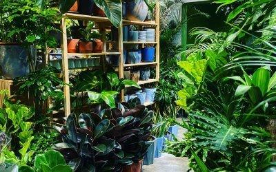 مشاتل للنباتات في كلانج فالي
