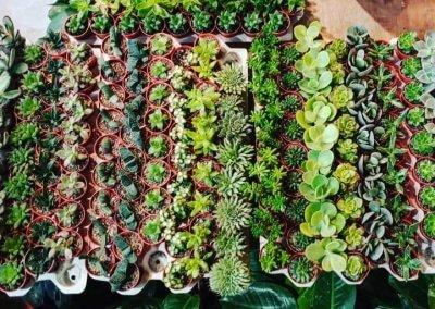 Plant & Pot Studio Puchong branch: 78, Jalan Puteri 5/5, Bandar Puteri, 47100 Puchong, Selangor Ampang branch: 1 & 2, Jalan Awf 3a, Ampang Waterfront, 68000 Ampang, Selangor