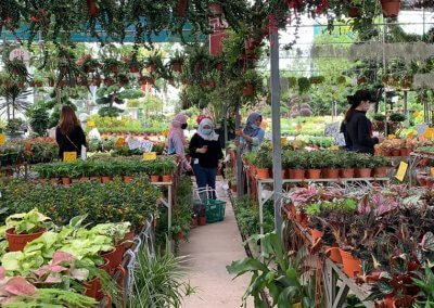 Paling Horticulture Sdn Bhd Address: Lot 952, Jalan Subang, Kampung Baru Sungai Buloh, Seksyen, U 4, 40160 Petaling Jaya, Selangor Operating hours: 8.30am - 7pm (Daily)