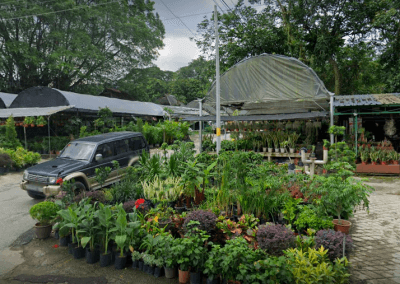 Leong Nursery Address: Lot 505, Jalan Lembah, Central Section Hospital Sungai Buloh, 47000 Selangor Darul Ehsan, Sungai Buloh, Selangor Operating hours: 8am - 6pm (Daily)