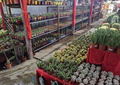 Katsura Garden Centre Address: Lot 18, Kawasan Lanskap & Nursery, Persiaran Tropicana 47400 Petaling Jaya, Selangor, Malaysia Operating hours: 8am - 7pm (Daily)