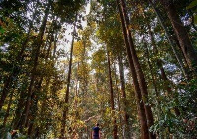 3. Wawasan Hill (Hutan Simpan Ayer Hitam)