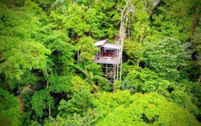البقاء بين الاشجار في الطبيعة المذهلة