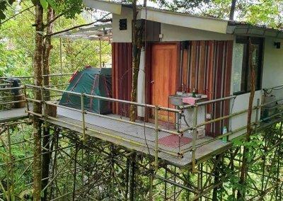 البقاء بين الاشجار في هذه الطبيعة المذهلة في باهانغ (15)