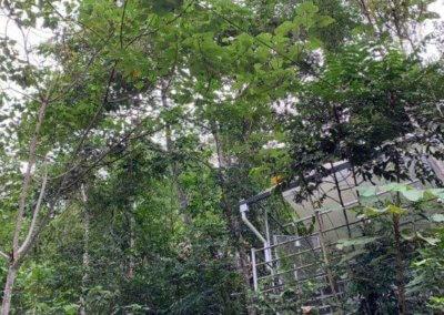 البقاء بين الاشجار في هذه الطبيعة المذهلة في باهانغ (7)