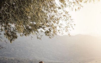 بحيرة بيريس في ولاية قدح