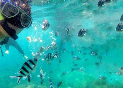جزيرة بولاو بايار كنز الشعب المرجانية (10)
