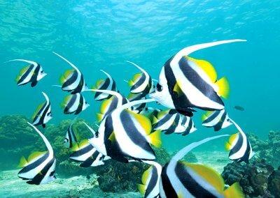 جزيرة بولاو بايار كنز الشعب المرجانية (3)