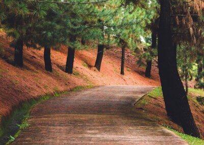 حديقة ذات طراز أوروبي مخبأة في بوتراجايا (10)