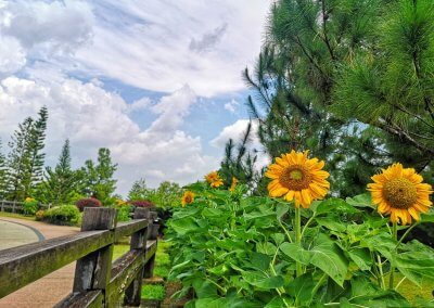 حديقة ذات طراز أوروبي مخبأة في بوتراجايا (11)