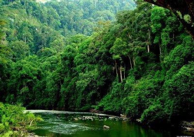 غابات ماليزيا عمرها اكثر من 130 مليون سنة (1)