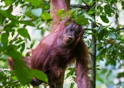 غابات ماليزيا عمرها اكثر من 130 مليون سنة (10)