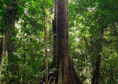 غابات ماليزيا عمرها اكثر من 130 مليون سنة (11)