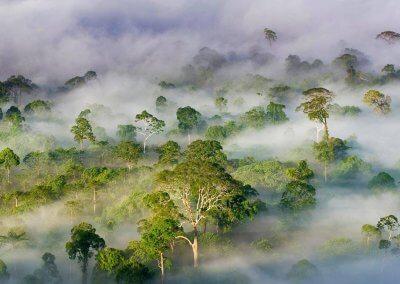غابات ماليزيا عمرها اكثر من 130 مليون سنة (12)