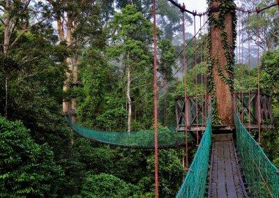 غابات ماليزيا عمرها اكثر من 130 مليون سنة (14)