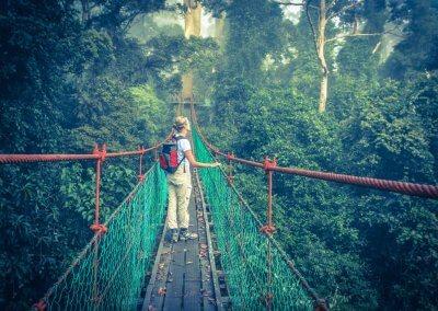 غابات ماليزيا عمرها اكثر من 130 مليون سنة (16)