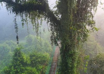 غابات ماليزيا عمرها اكثر من 130 مليون سنة (2)