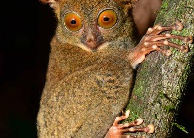 غابات ماليزيا عمرها اكثر من 130 مليون سنة (22)