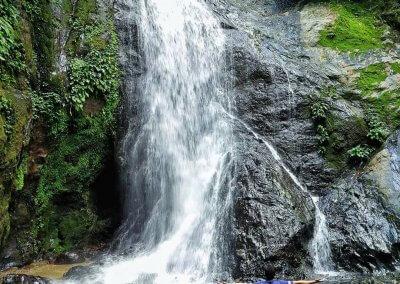 غابات ماليزيا عمرها اكثر من 130 مليون سنة (24)