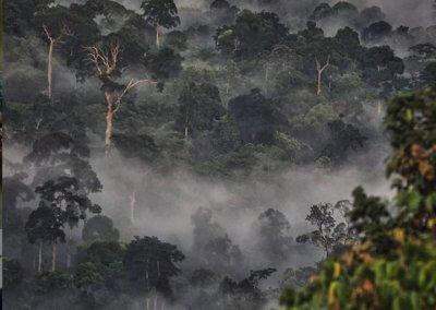 غابات ماليزيا عمرها اكثر من 130 مليون سنة (25)