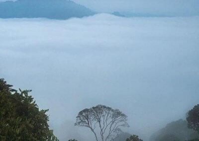 غابات ماليزيا عمرها اكثر من 130 مليون سنة (26)