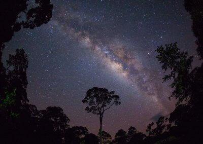 غابات ماليزيا عمرها اكثر من 130 مليون سنة (27)