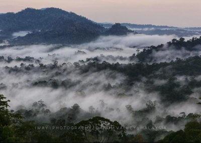غابات ماليزيا عمرها اكثر من 130 مليون سنة (28)